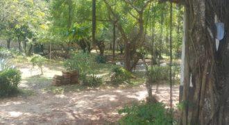 Old Nyali Plot