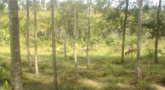MCHINGIRINI-PLOT FOR SALE